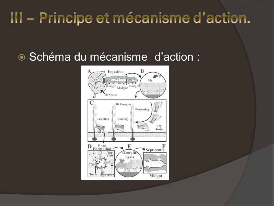 Schéma du mécanisme daction :