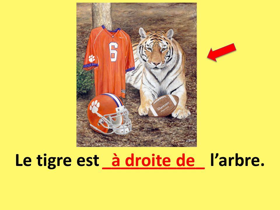 Le tigre est ___________ larbre. à droite de