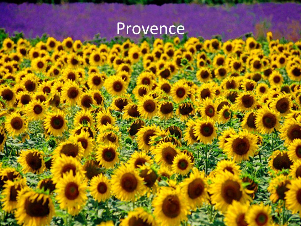 Provence: Lavande et tournesols