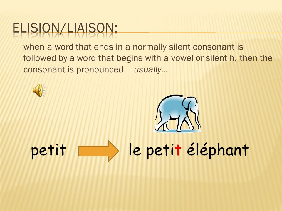 le petit éléphantpetit when a word that ends in a normally silent consonant is followed by a word that begins with a vowel or silent h, then the consonant is pronounced – usually...