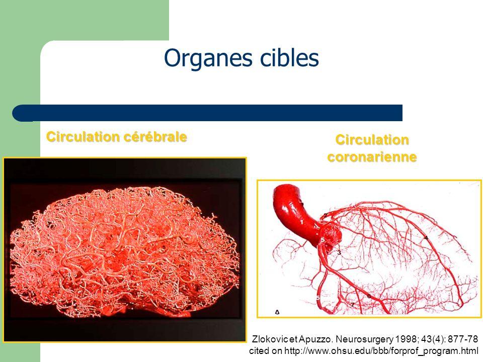 Circulation cérébrale Circulation coronarienne Organes cibles Zlokovic et Apuzzo.