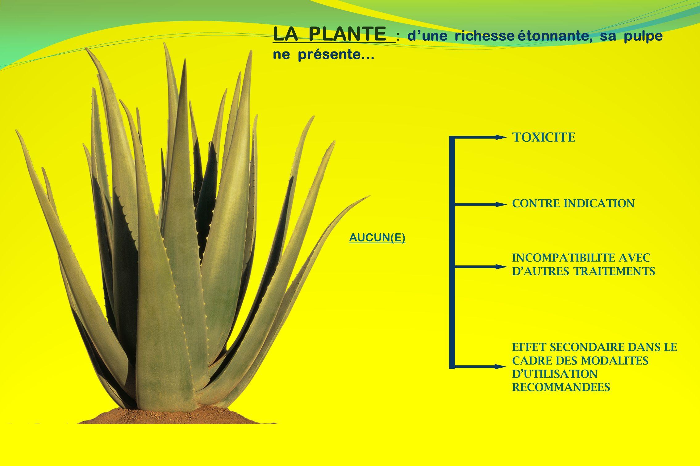 La feuille fraîche de lAloé Vera contient essentiellement : Des Vitamines : A, B1, B2, B3, B6, B9, B12, C, E,…..