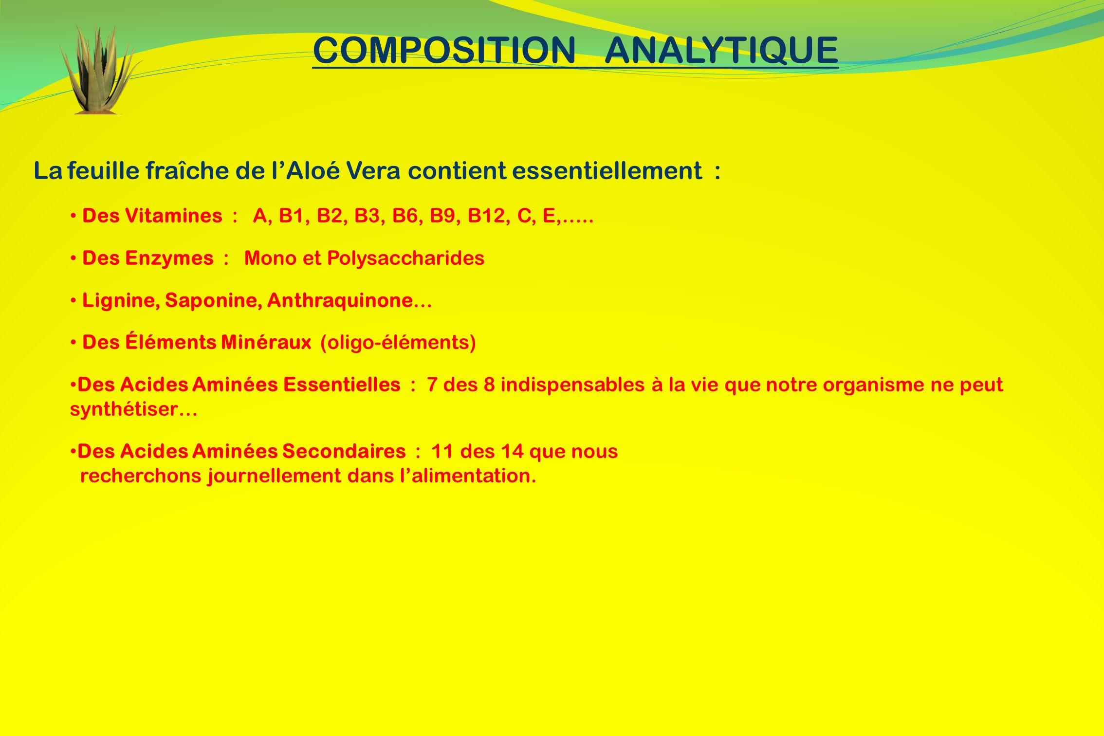 La feuille fraîche de lAloé Vera contient essentiellement : Des Vitamines : A, B1, B2, B3, B6, B9, B12, C, E,….. Des Enzymes : Mono et Polysaccharides