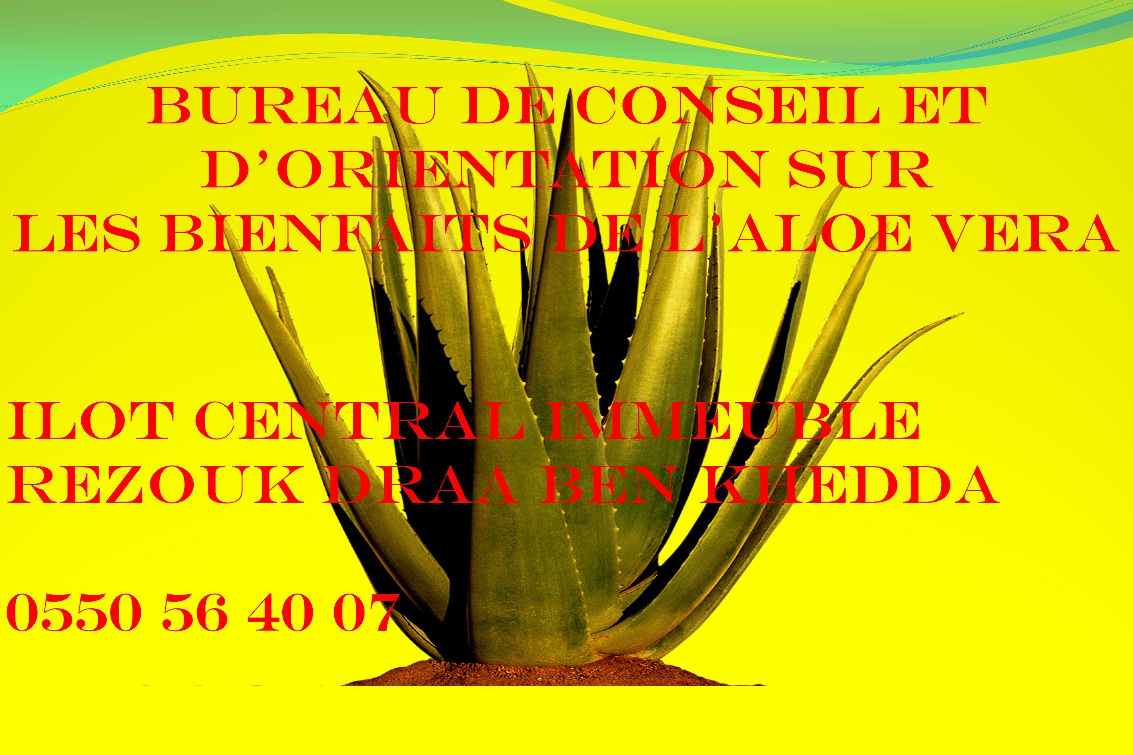 Bureau de conseil et dorientation sur les bienfaits de LALOE VERA Ilot central immeuble rezouk draa ben khedda 0550 56 40 07
