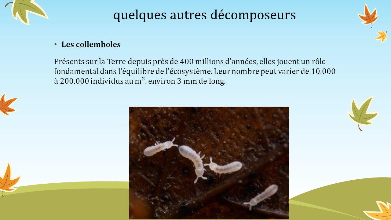 quelques autres décomposeurs Les collemboles Présents sur la Terre depuis près de 400 millions dannées, elles jouent un rôle fondamental dans l'équili