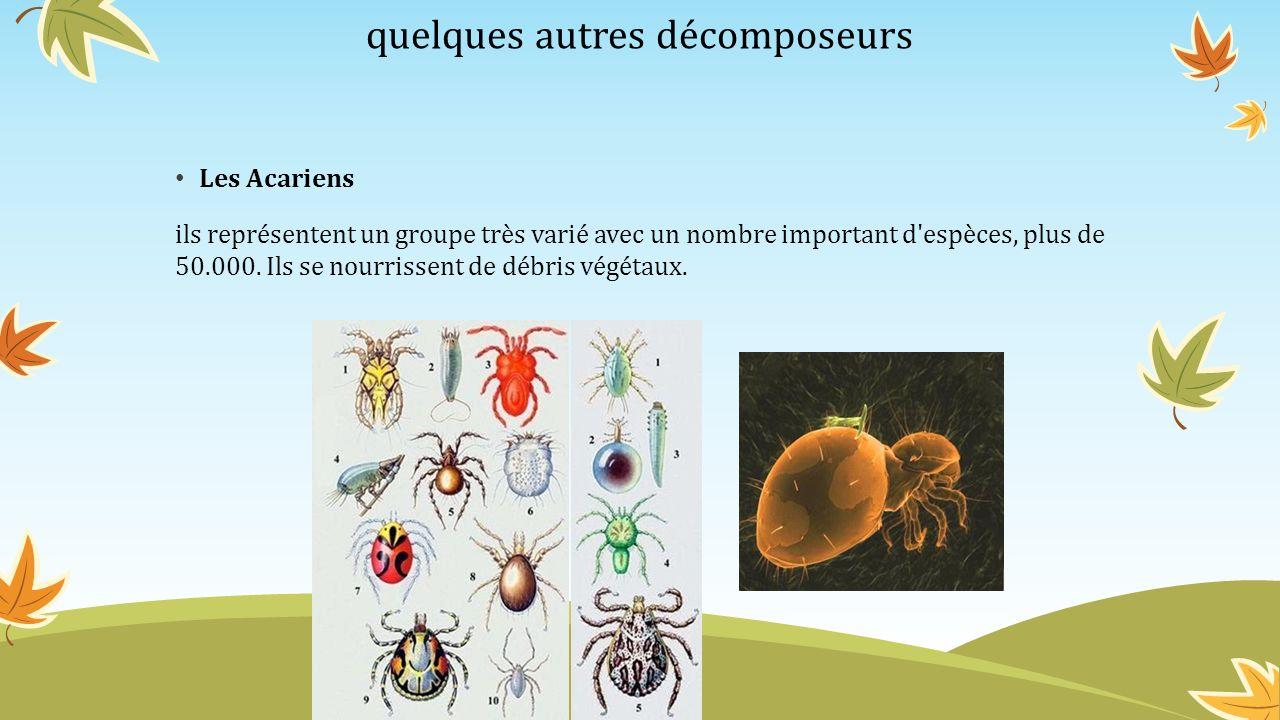 quelques autres décomposeurs Les Acariens ils représentent un groupe très varié avec un nombre important d'espèces, plus de 50.000. Ils se nourrissent