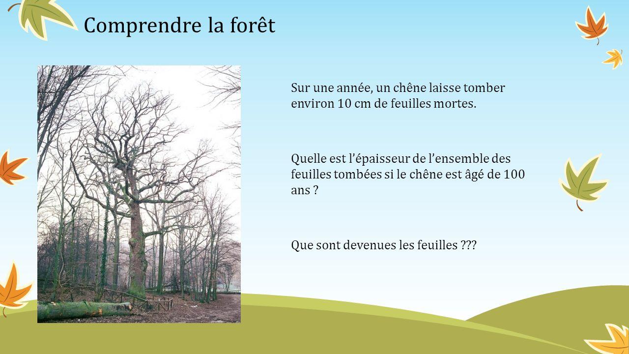 Comprendre la forêt Sur une année, un chêne laisse tomber environ 10 cm de feuilles mortes. Quelle est lépaisseur de lensemble des feuilles tombées si