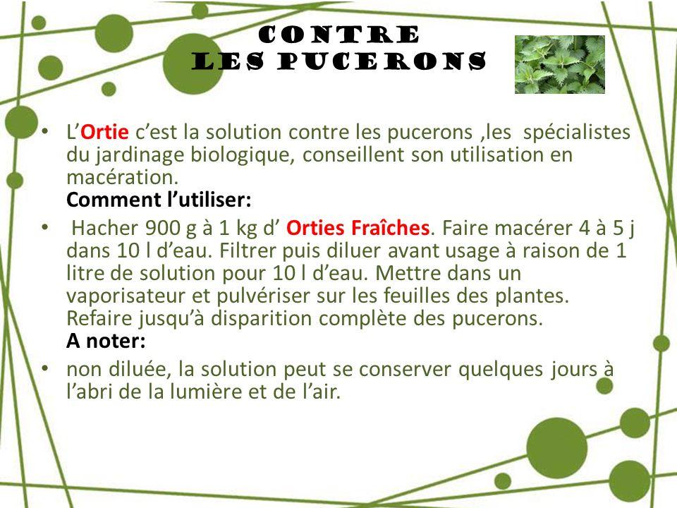 Contre Les Pucerons LOrtie cest la solution contre les pucerons,les spécialistes du jardinage biologique, conseillent son utilisation en macération. C
