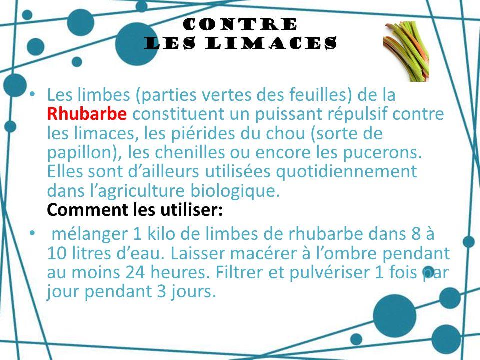 Contre Les Limaces Les limbes (parties vertes des feuilles) de la Rhubarbe constituent un puissant répulsif contre les limaces, les piérides du chou (