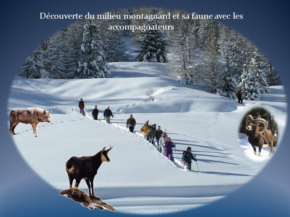 Découverte du milieu montagnard et sa faune avec les accompagnateurs