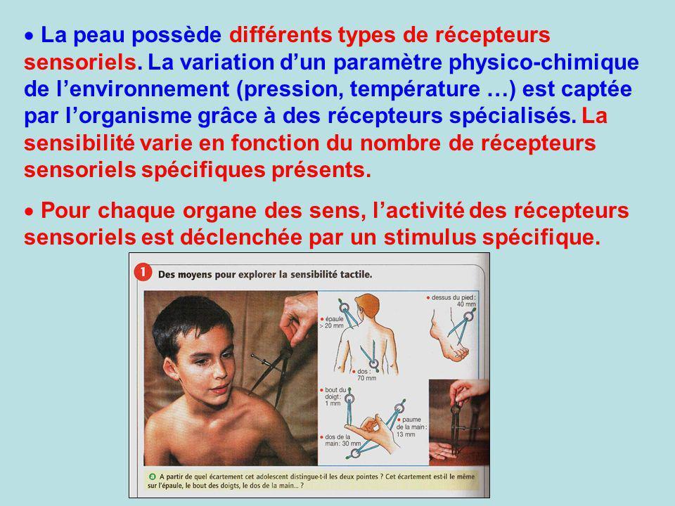 La peau possède différents types de récepteurs sensoriels. La variation dun paramètre physico-chimique de lenvironnement (pression, température …) est