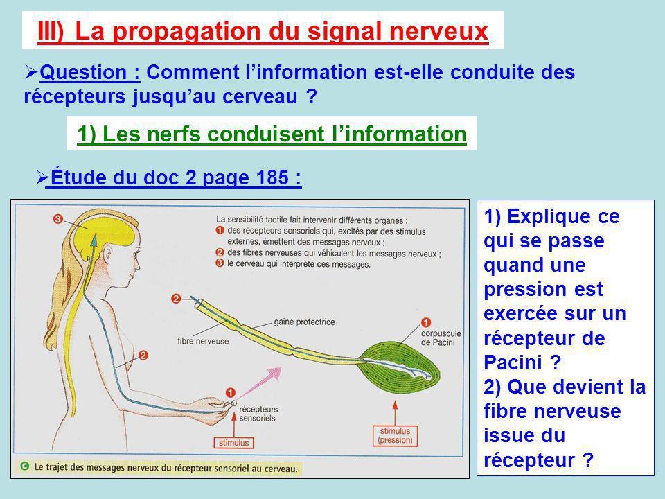III) La propagation du signal nerveux Question : Comment linformation est-elle conduite des récepteurs jusquau cerveau ? 1) Les nerfs conduisent linfo