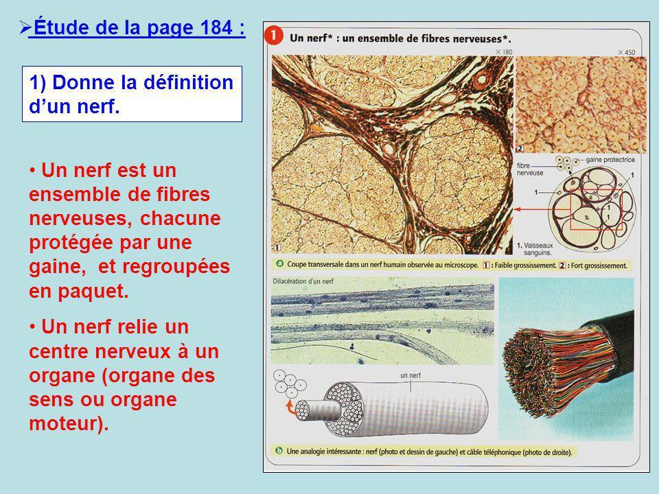 Étude de la page 184 : 1) Donne la définition dun nerf. Un nerf est un ensemble de fibres nerveuses, chacune protégée par une gaine, et regroupées en