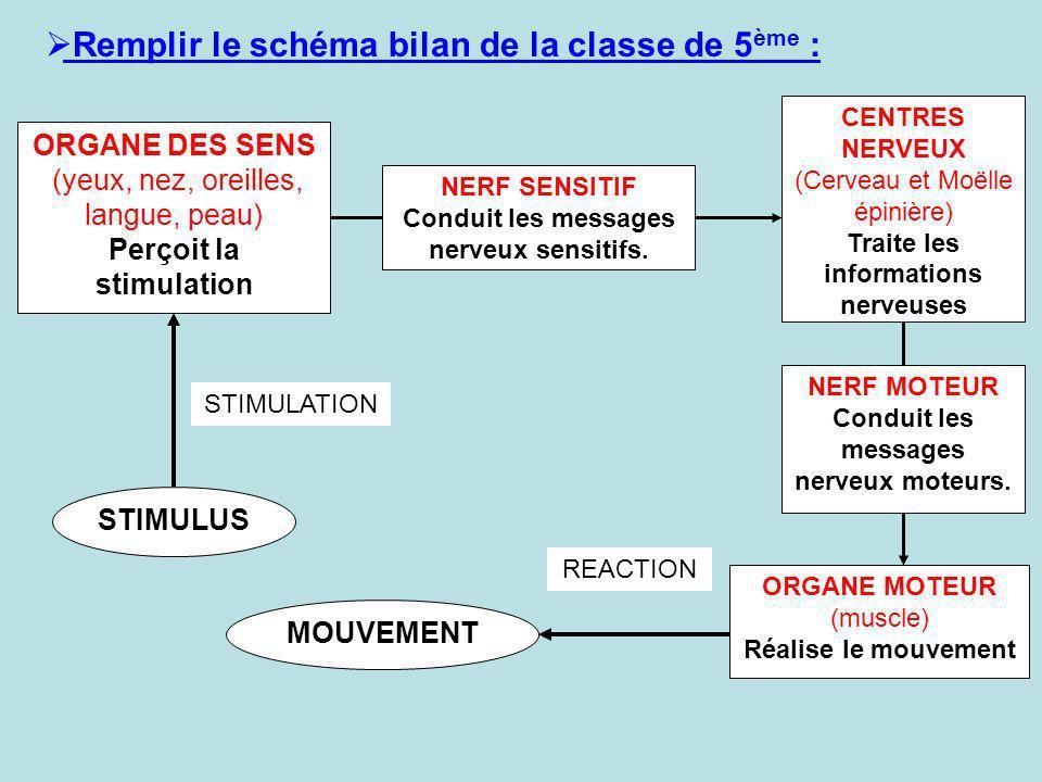 Remplir le schéma bilan de la classe de 5 ème : ORGANE DES SENS (yeux, nez, oreilles, langue, peau) Perçoit la stimulation CENTRES NERVEUX (Cerveau et