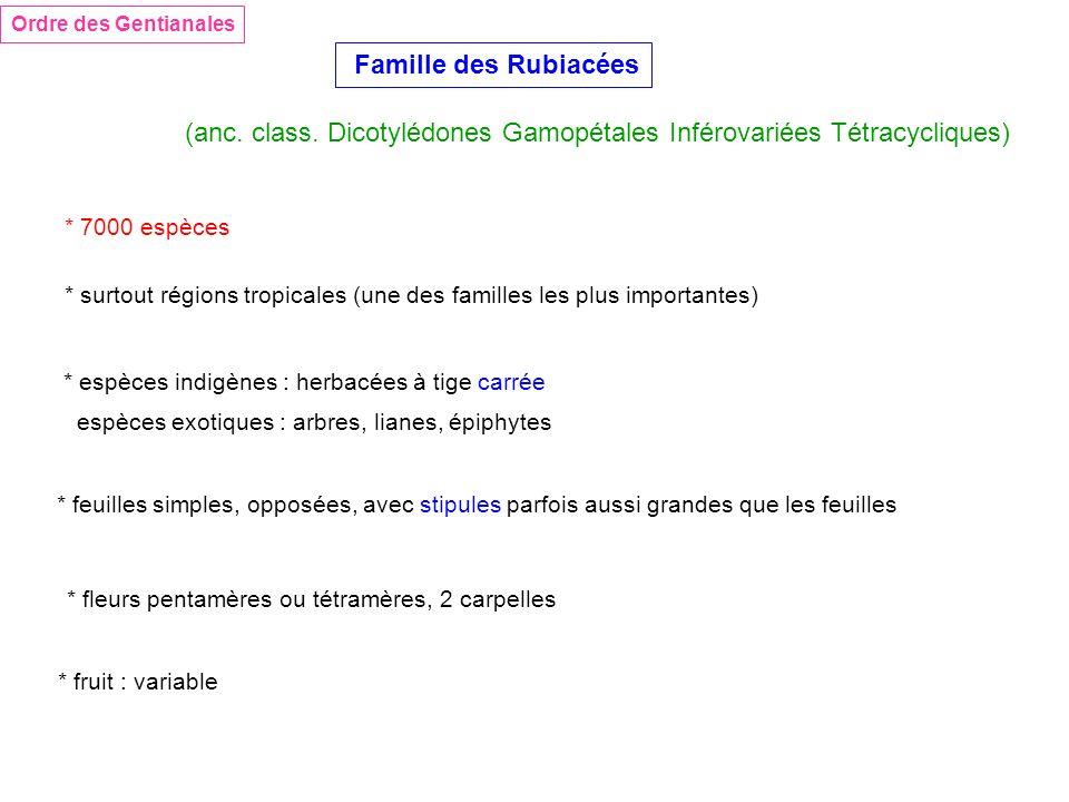 Ordre des Gentianales Famille des Rubiacées (anc. class. Dicotylédones Gamopétales Inférovariées Tétracycliques) * 7000 espèces * surtout régions trop