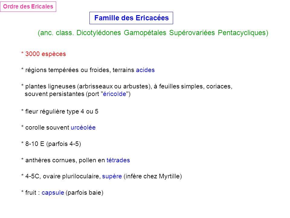 Ordre des Ericales Famille des Ericacées (anc. class. Dicotylédones Gamopétales Supérovariées Pentacycliques) * 3000 espèces * régions tempérées ou fr
