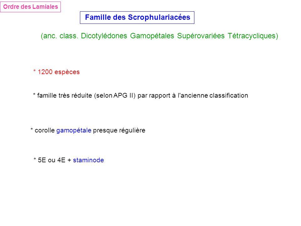 Ordre des Lamiales Famille des Scrophulariacées (anc. class. Dicotylédones Gamopétales Supérovariées Tétracycliques) * 1200 espèces * corolle gamopéta