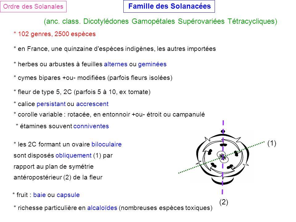 Ordre des Solanales Famille des Solanacées (anc. class. Dicotylédones Gamopétales Supérovariées Tétracycliques) * 102 genres, 2500 espèces * en France