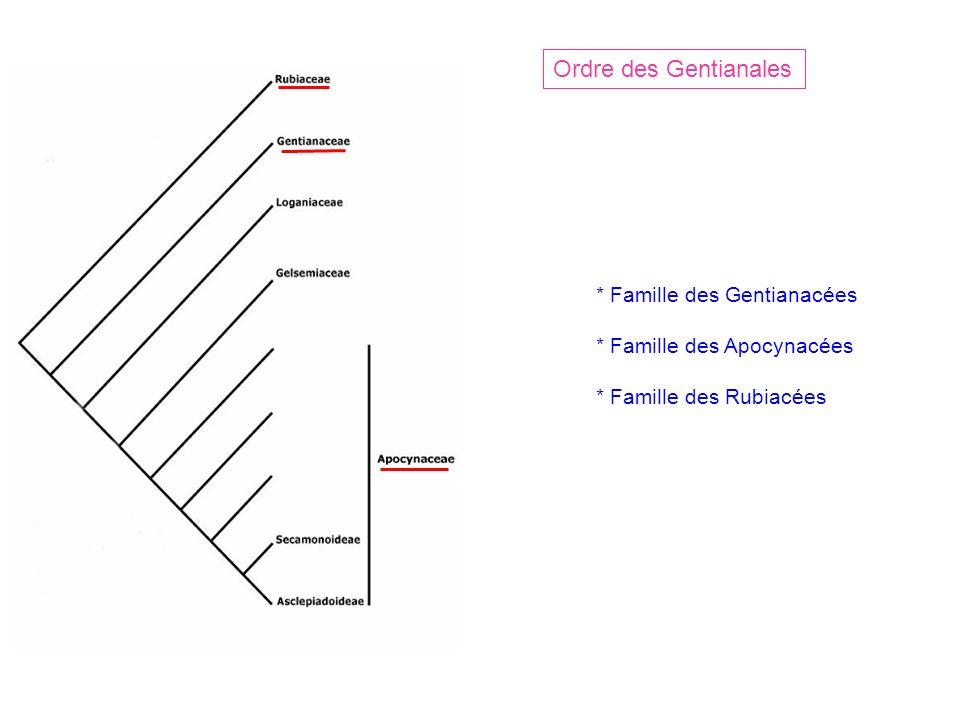Ordre des Gentianales * Famille des Gentianacées * Famille des Apocynacées * Famille des Rubiacées