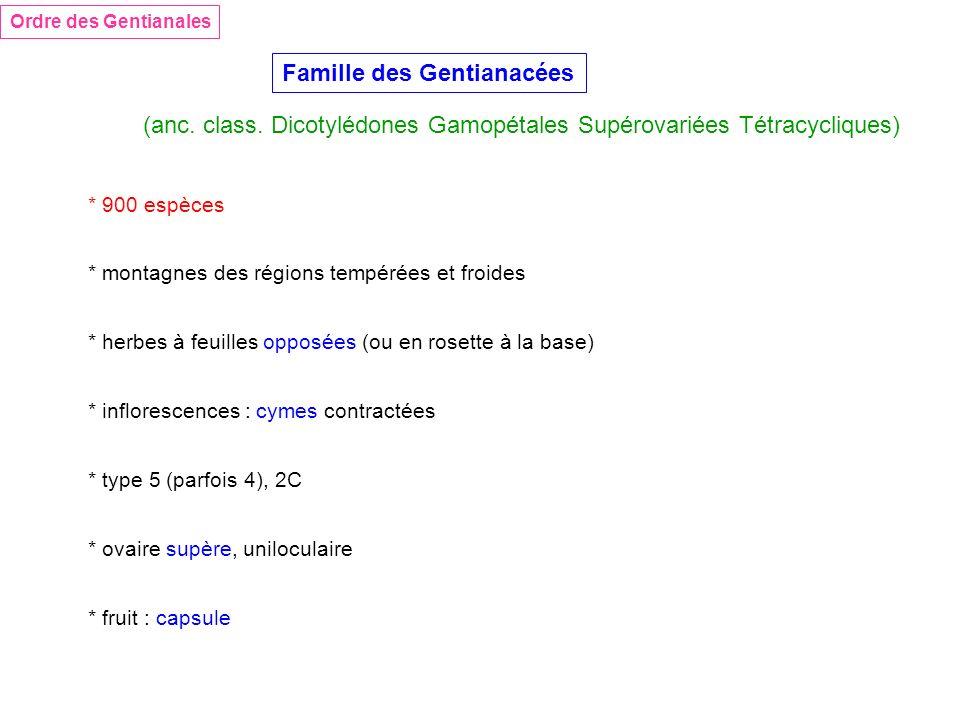 Ordre des Gentianales Famille des Gentianacées (anc. class. Dicotylédones Gamopétales Supérovariées Tétracycliques) * 900 espèces * montagnes des régi