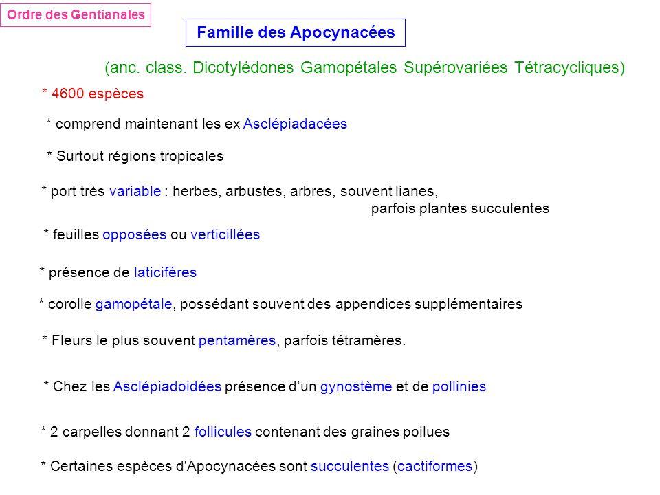 Ordre des Gentianales Famille des Apocynacées (anc. class. Dicotylédones Gamopétales Supérovariées Tétracycliques) * 4600 espèces * comprend maintenan