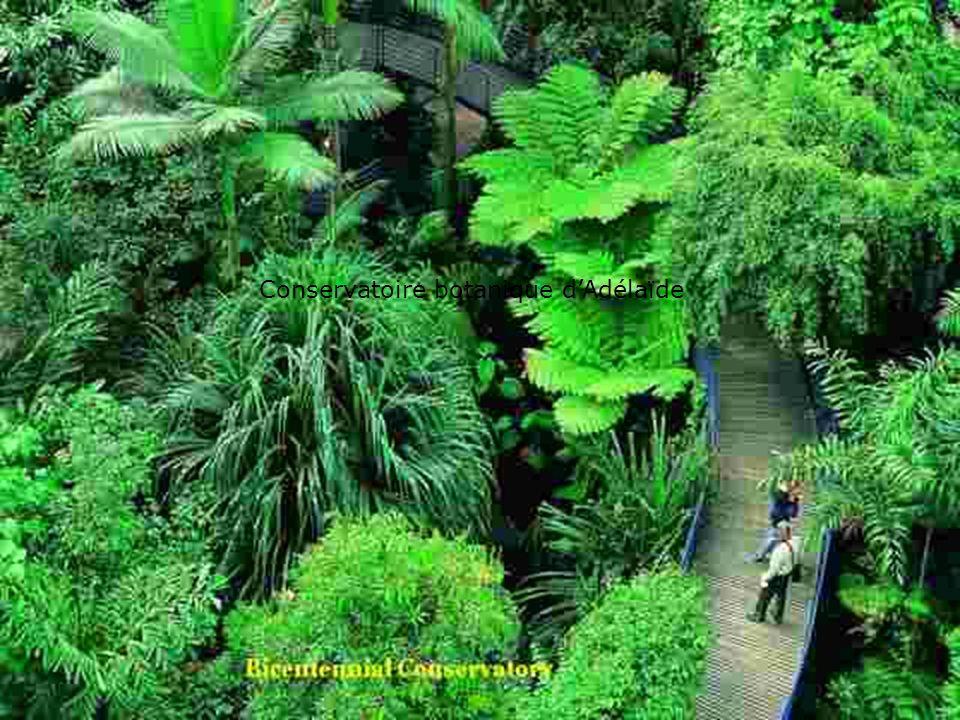 Les serres: Aspects techniques, scientifiques, muséographiques et pédagogiques Lyon, 22 Octobre 2008 Conservatoire botanique dAdélaïde