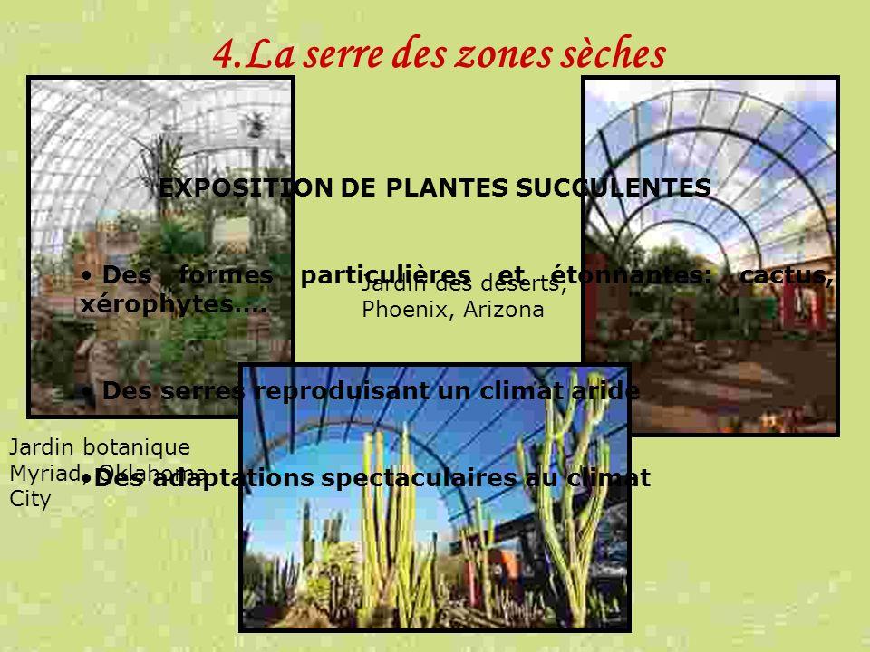 4.La serre des zones sèches EXPOSITION DE PLANTES SUCCULENTES Des formes particulières et étonnantes: cactus, xérophytes…. Des serres reproduisant un