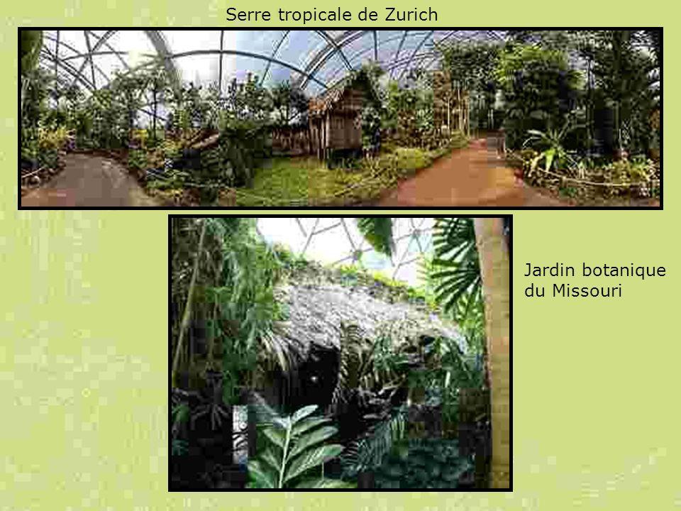 Serre tropicale de Zurich Jardin botanique du Missouri