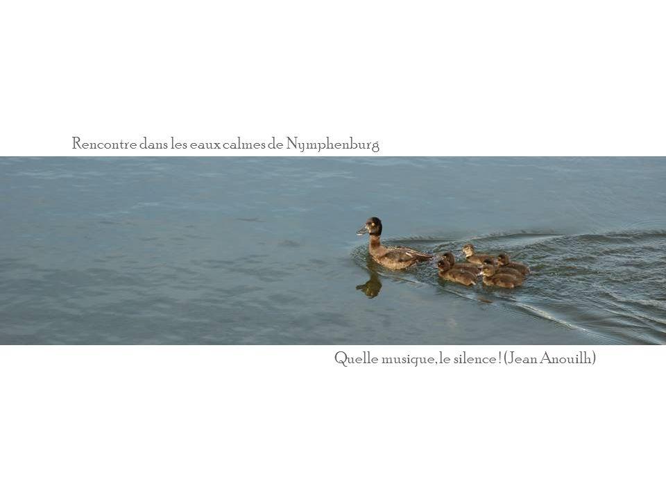 Rencontre dans les eaux calmes de Nymphenburg Quelle musique, le silence ! (Jean Anouilh)
