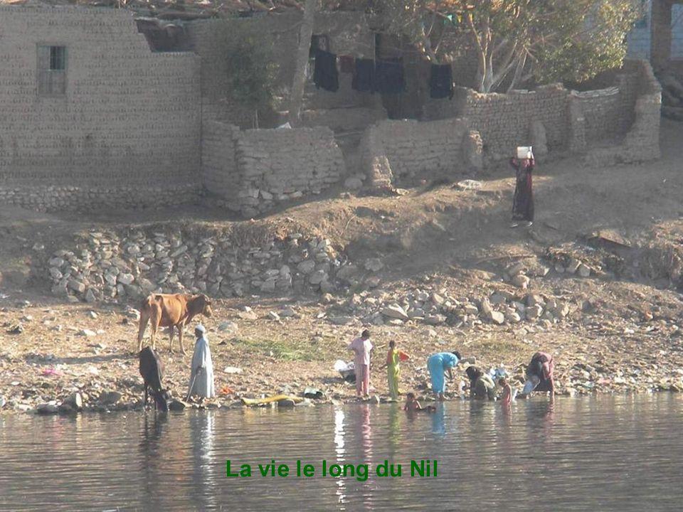 La felouque et notre jeune conducteur le long du Nil