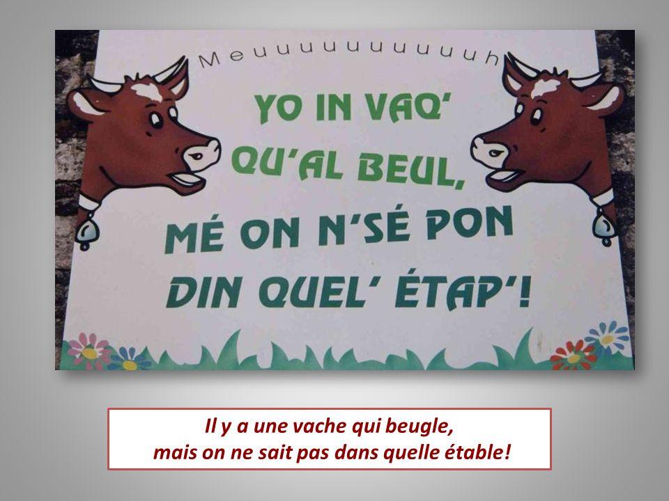 Il y a une vache qui beugle, mais on ne sait pas dans quelle étable!