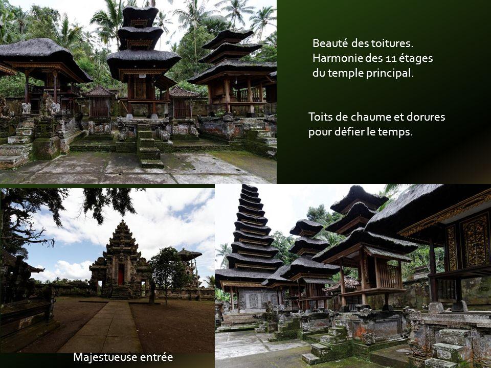 Sur fond de végétation tropicale: Chaume Dorure Mousse