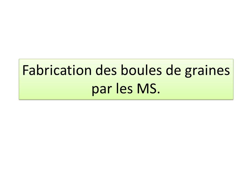 Fabrication des boules de graines par les MS.