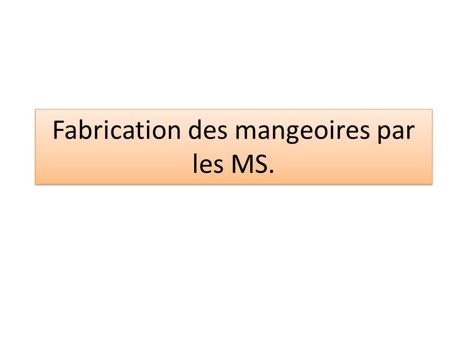 Fabrication des mangeoires par les MS.