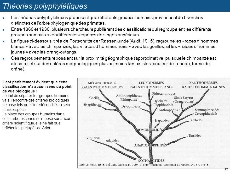 Théories polyphylétiques Les théories polyphylétiques proposent que différents groupes humains proviennent de branches distinctes de larbre phylogéniq