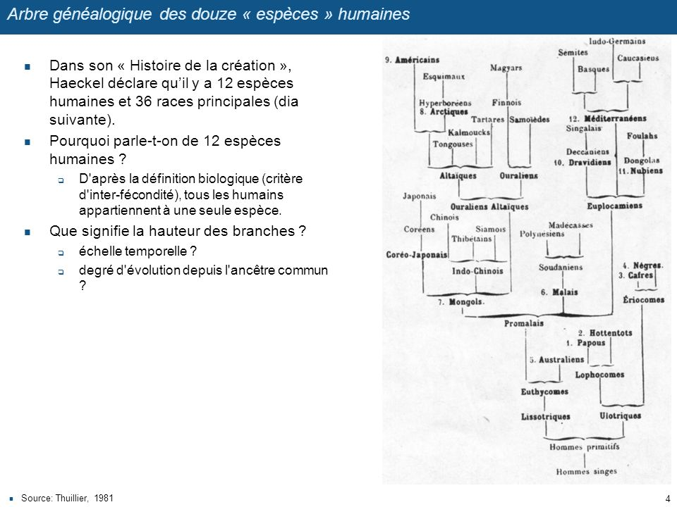 Arbre généalogique des douze « espèces » humaines Dans son « Histoire de la création », Haeckel déclare quil y a 12 espèces humaines et 36 races princ