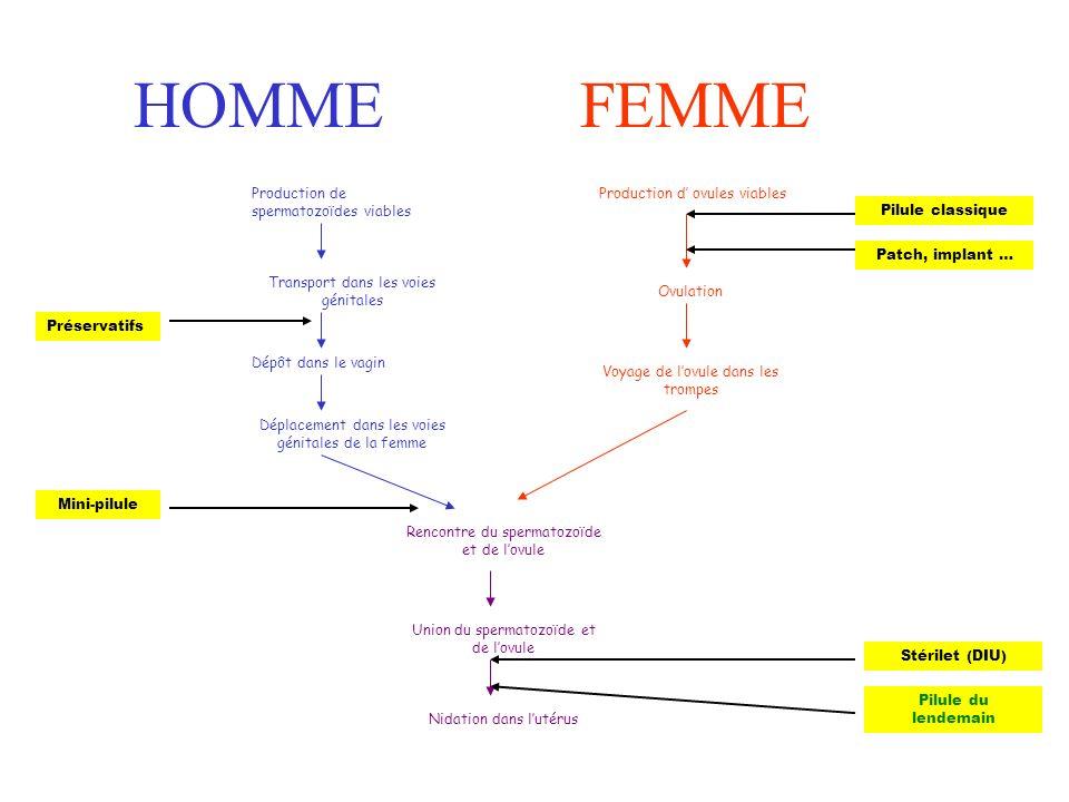 HOMMEFEMME Production de spermatozoïdes viables Transport dans les voies génitales Dépôt dans le vagin Déplacement dans les voies génitales de la femm