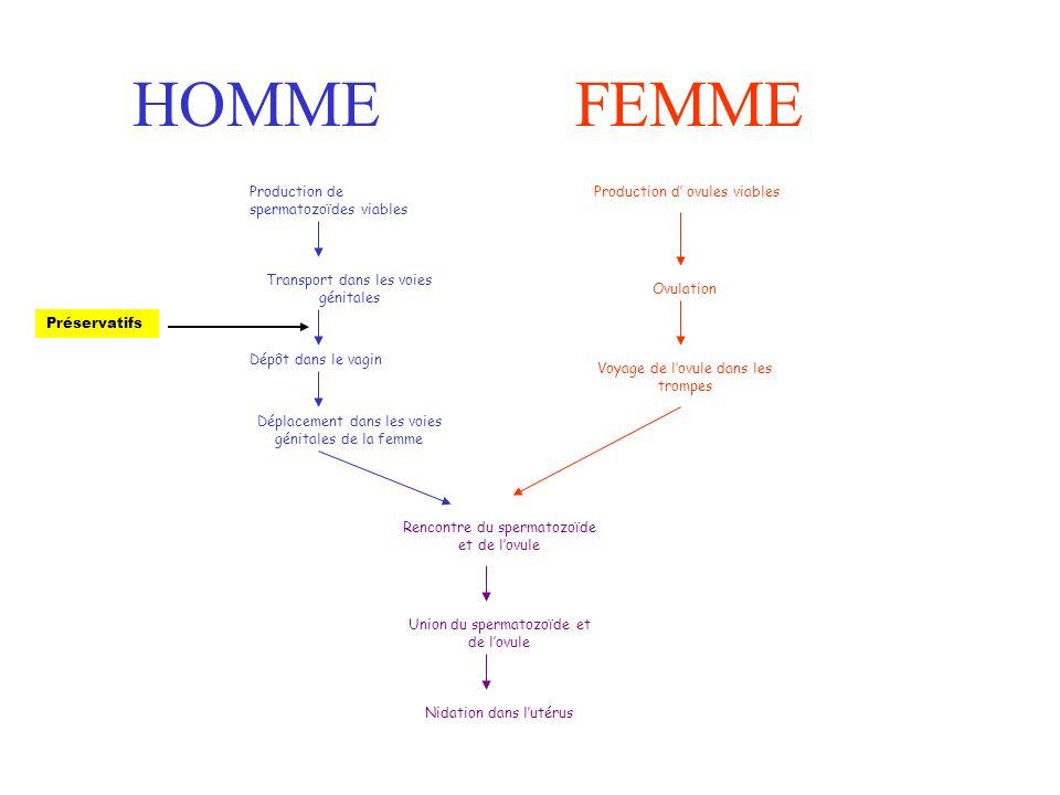HOMMEFEMME Production de spermatozoïdes viables Transport dans les voies génitales Dépôt dans le vagin Déplacement dans les voies génitales de la femme Rencontre du spermatozoïde et de lovule Union du spermatozoïde et de lovule Nidation dans lutérus Production d ovules viables Ovulation Voyage de lovule dans les trompes Préservatifs
