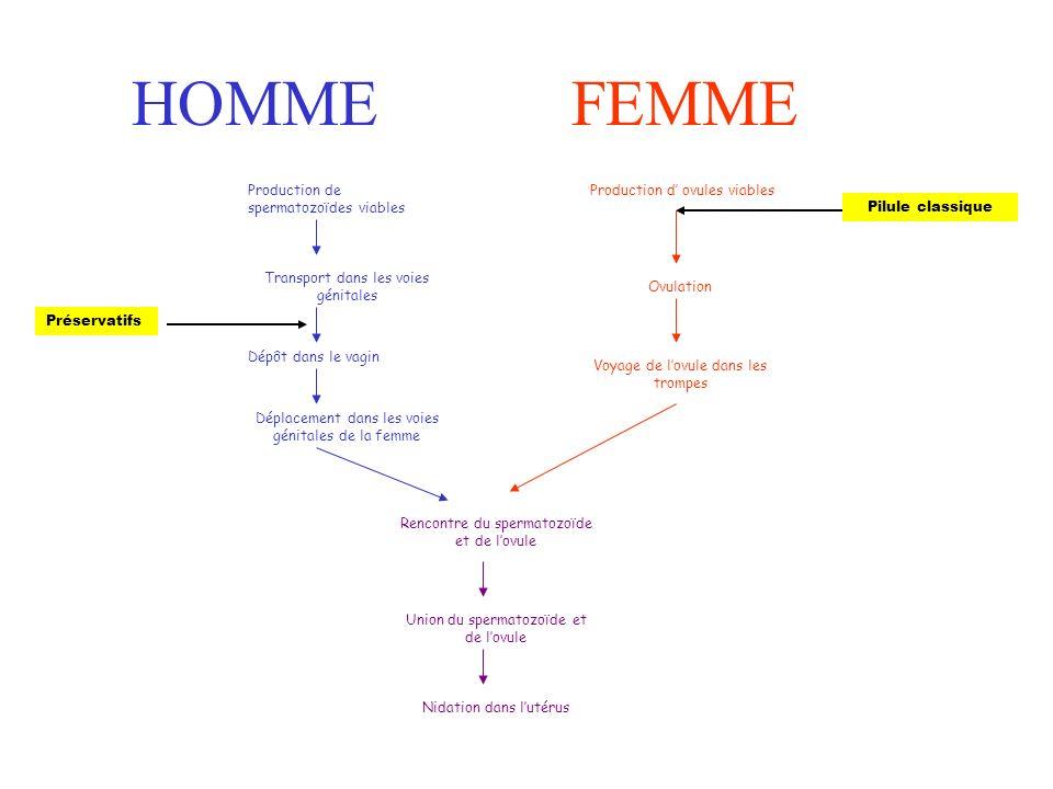 HOMMEFEMME Production de spermatozoïdes viables Transport dans les voies génitales Dépôt dans le vagin Déplacement dans les voies génitales de la femme Rencontre du spermatozoïde et de lovule Union du spermatozoïde et de lovule Nidation dans lutérus Production d ovules viables Ovulation Voyage de lovule dans les trompes Préservatifs Pilule classique