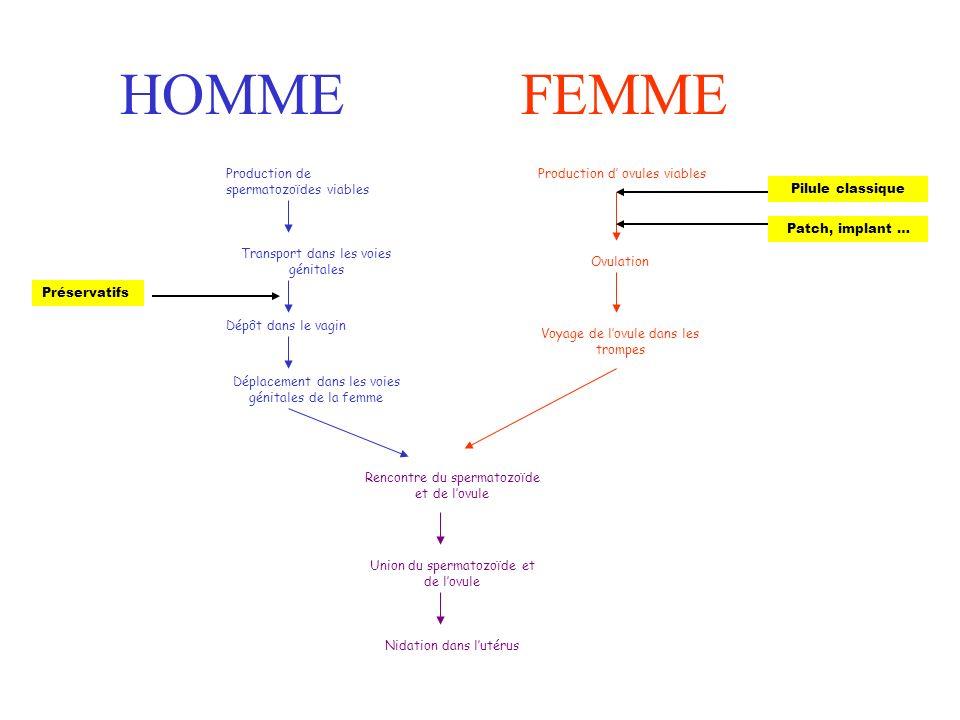 HOMMEFEMME Production de spermatozoïdes viables Transport dans les voies génitales Dépôt dans le vagin Déplacement dans les voies génitales de la femme Rencontre du spermatozoïde et de lovule Union du spermatozoïde et de lovule Nidation dans lutérus Production d ovules viables Ovulation Voyage de lovule dans les trompes Préservatifs Pilule classique Patch, implant …