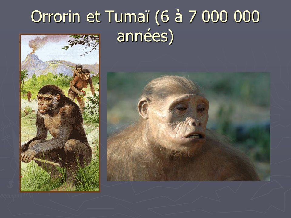 Orrorin et Tumaï (6 à 7 000 000 années)