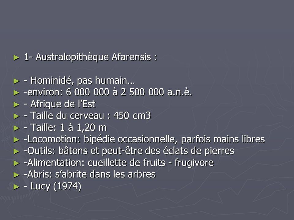 1- Australopithèque Afarensis : 1- Australopithèque Afarensis : - Hominidé, pas humain… - Hominidé, pas humain… -environ: 6 000 000 à 2 500 000 a.n.è.
