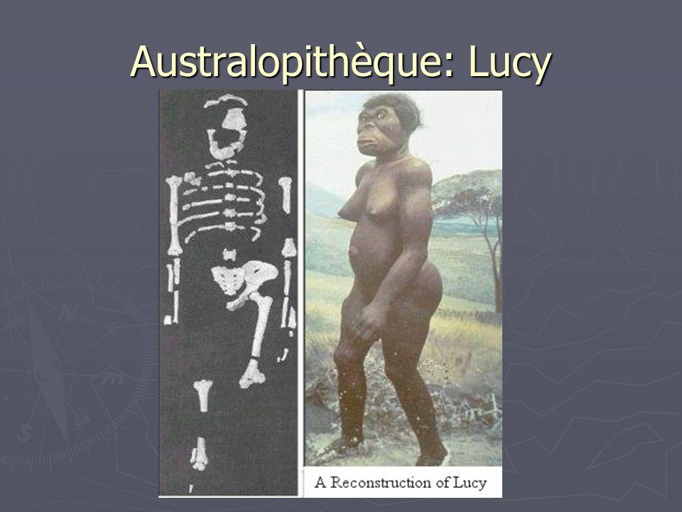 Australopithèque: Lucy