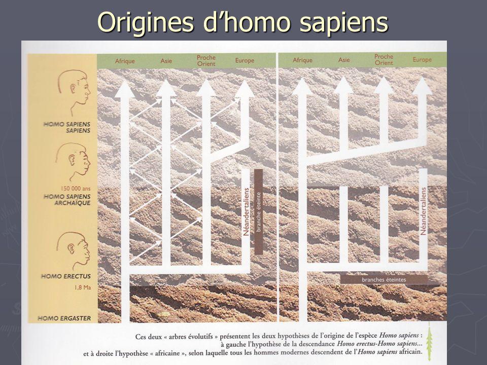 Origines dhomo sapiens