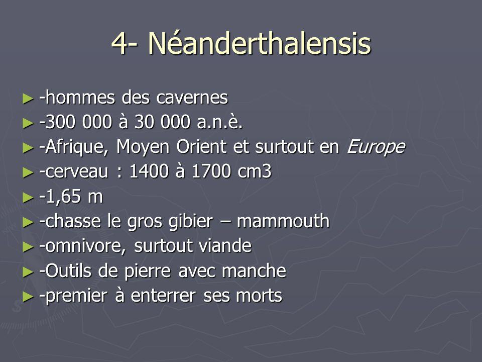 4- Néanderthalensis -hommes des cavernes -hommes des cavernes -300 000 à 30 000 a.n.è. -300 000 à 30 000 a.n.è. -Afrique, Moyen Orient et surtout en E