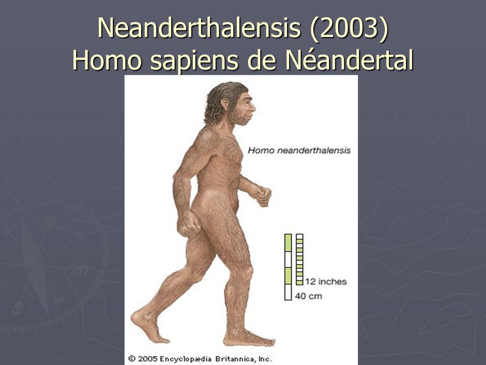 Neanderthalensis (2003) Homo sapiens de Néandertal