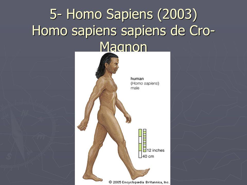 5- Homo Sapiens (2003) Homo sapiens sapiens de Cro- Magnon