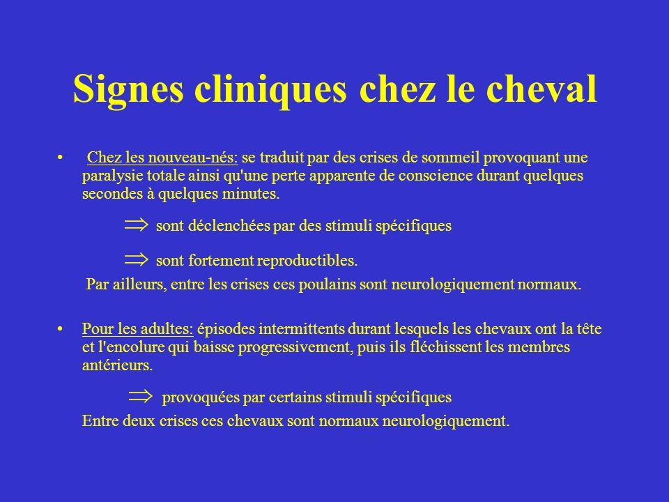 Diagnostic chez le cheval D abord fondé sur les commémoratifs puis clinique : somnolence et catalepsie.