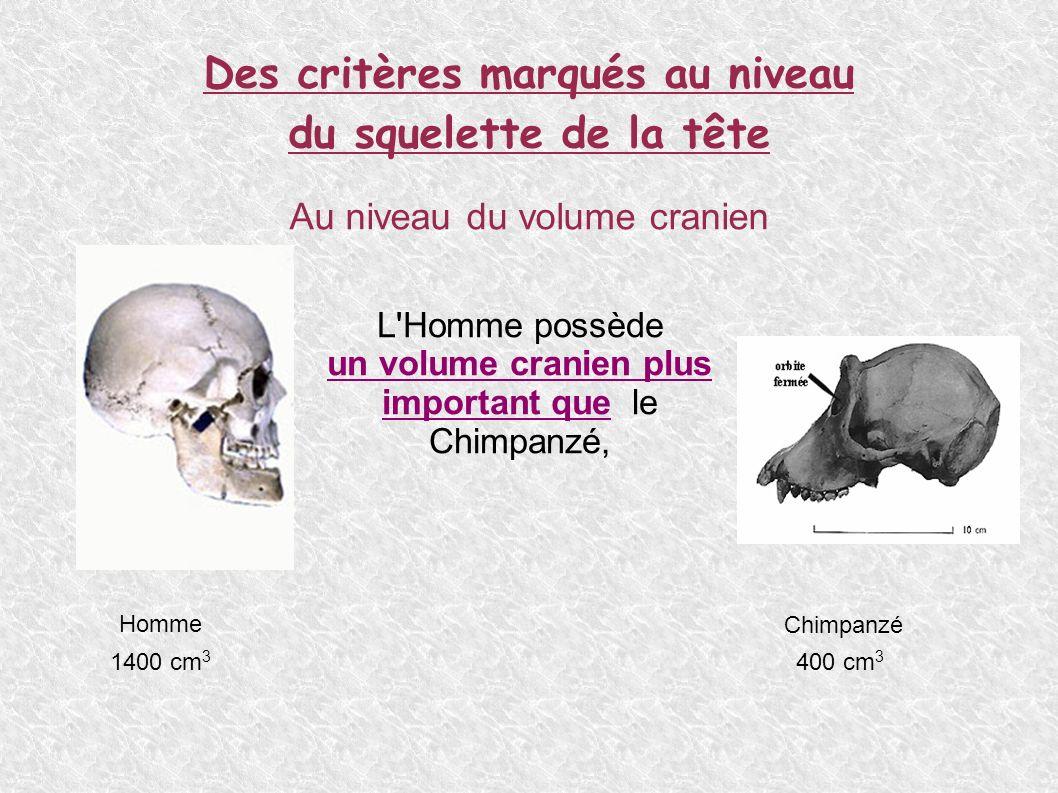 Des critères marqués au niveau du squelette de la tête Au niveau de la forme du crâne L Homme possède un crâne au profil arrondi un front haut Le Chimpanzé possède un crâne à la forme aplatie avec un chignon occipital (1) un front fuyant 1