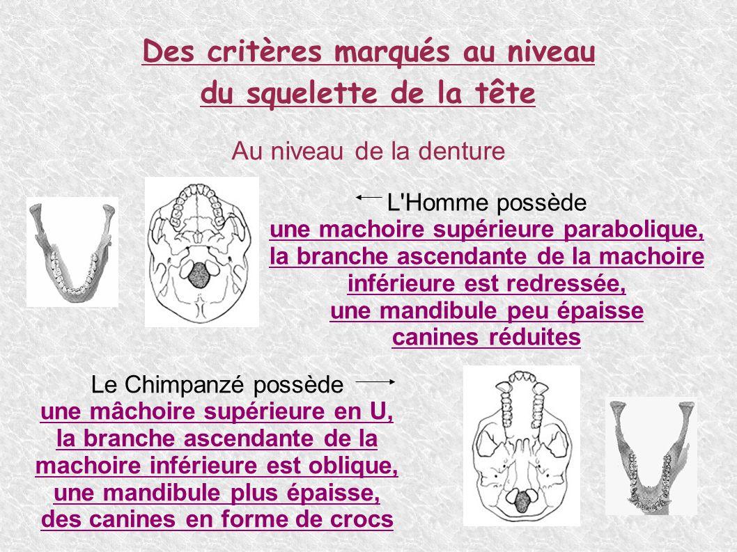 Des critères liés au dimorphisme sexuel du squelette Un dimorphisme sexuel = différences morphologiques entre homme et femme.